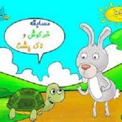 آیا میدانید برنده مسابقه خرگوش و لاک پشت که بود؟