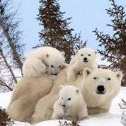 آیا می دانید خانواده حیوانات چیست؟