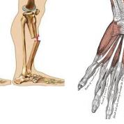 آیا میدانید استخوان های دست و پا چیست؟