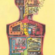 آیا میدانید کارخانه بدن انسان از چه تشکیل شده است؟