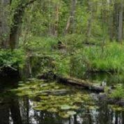 آیا میدانید جنگل چیست؟