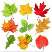 آیا میدانید برگ چیست؟
