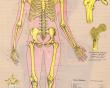 آیا میدانید استخوان بندی انسان (اسکلت) چیست؟