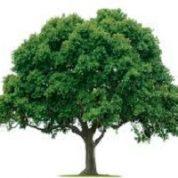 آیا میدانید درخت چیست؟