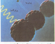 آیا میدانید چرا هسته اتم ها متلاشی نمی شوند؟