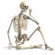 آیا میدانید در بدن چند استخوان وجود دارد؟