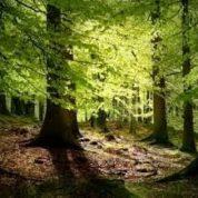 آیا میدانید گیاه جنگل های پرباران چیست؟