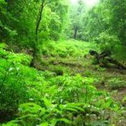 آیا میدانید بیشه و جنگل چیست؟