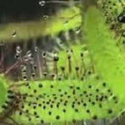آیا میدانید گیاه قاتل چیست؟