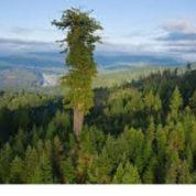 آیا میدانید بلندترین موجودات زنده چه هستند؟