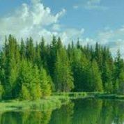 آیا میدانید درخت همیشه سبز چه درختی است؟