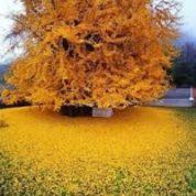 آیا میدانید ریزش برگ ها چه موقع اتفاق می افتد؟