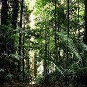 آیا میدانید جنگل های باران در کجا ها هستند؟