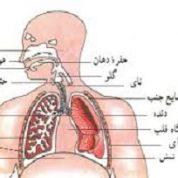 آیا میدانید هوایی که تنفس می کنیم چه می شود؟