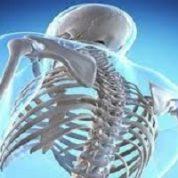 آیا میدانید مهم ترین استخوان بدن کدام است؟