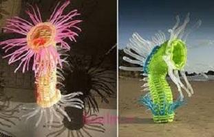 آیا میدانید گیاه دریایی بادکنکی بادکنک دارد؟