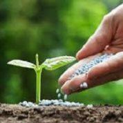 آیا میدانید گیاهان چگونه تغذیه میکنند؟