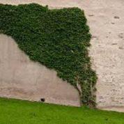 آیا میدانید گیاهان رونده چگونه بالا می روند؟