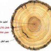 آیا میدانید چگونه می توان سن درخت را فهمید؟