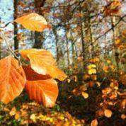 آیا میدانید درختان برگ ریز کدامند؟
