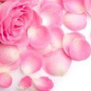 آیا میدانید چرا گل ها رنگی اند؟