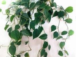 آیا میدانید چرا بسیاری از گیاهان سبزند؟