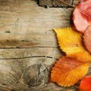 آیا میدانید چرا برگ درختان در پاییز،زرد،قرمز و قهوه ای می شود؟