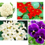 آیا میدانید چرا ما گل ها رو می خوریم؟