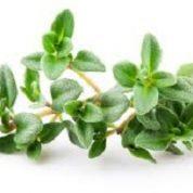 آیا میدانید  گیاه آویشن چیست؟