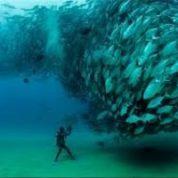 آیا میدانید فشار آب در زیر دریا چقدر است؟