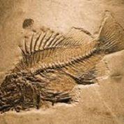 آیا میدانید چگونه از وجود حیوانات ماقبل تاریخ آگاه می شویم؟