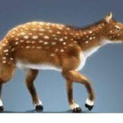 آیا میدانید اندازه اسب اولیه چقدر بود؟