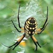 آیا میدانید بین حشره و عنکبوت چه تفاوتی وجود دارد؟