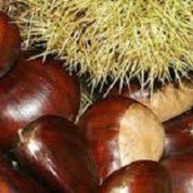 آیا میدانید گیاه شاه بلوط چیست و چه خاصیتی دارد؟