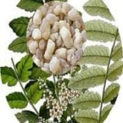 آیا میدانید گیاه کندر چیست و چه خاصیتی دارد؟