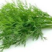 آیا میدانید گیاه شوید چیست و چه خاصیتی دارد؟