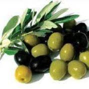 آیا میدانید گیاه زیتون چیست و چه خاصیتی دارد؟