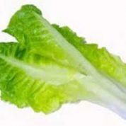 آیا میدانید گیاه کاهو چیست و چه خاصیتی دارد؟