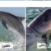 آیا میدانید چه تفاوتی بین دلفین و گراز دریایی وجود دارد؟