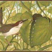 آیا میدانید کدام پرنده لانه خود را می دوزد؟
