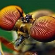 آیا میدانید بیشتر حشرات چشمهایی با هزاران عدسی دارند؟