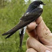 آیا میدانید پرندگان تا چه مسافتی می توانند مهاجرت کنند؟