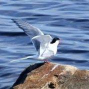 آیا میدانید سرعت تیز پروازترین حیوان چقدر است؟