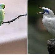 آیا میدانید چه حیواناتی وجود دارند که بتوانند صحبت بکنند؟