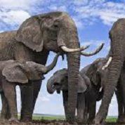 آیا میدانید کدام حیوان بلندترین دماغ را دارد؟