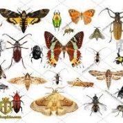 آیا میدانید چند نوع حیوان در جهان وجود دارد؟