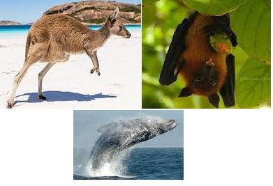 آیا میدانید چرا به وال،خفاش و کانگورو پستاندار می گویند؟